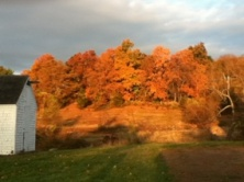 Fall Foliage at Steele Farm. Photo by Peter Norton.