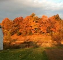 Fall Foliage at Steele Farm. Photo by Peter Norton.
