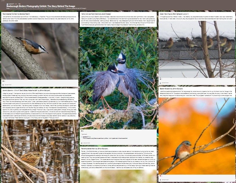 Boxborough Birders Photography Exhibit